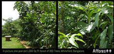 300 trees in 6 cars parcing plot