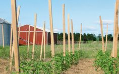 Cover Crops: Fewer Weeds, Less Labor: Organic Gardening