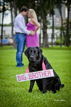 pregnancy announcements, maternity photos, maternity pics, maternity pictures, for the future, baby announcements, birth announcements, dog, black labs