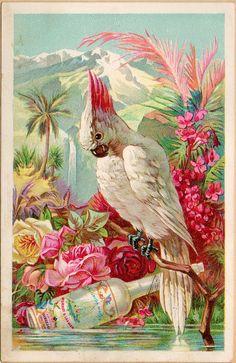 The Vintage bird