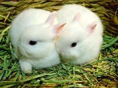 yavru tavşan