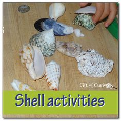 Shell activities for kids - ordering, sorting, examining, and experiencing them with all five senses #shells #ocean || Gift of Curiosity