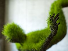 Mathilde Roussel, Lives of Grass. soil, wheat seeds, structure from recycled metal, fabric.