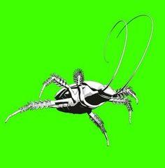 How to Kill Roach Infestation thumbnail