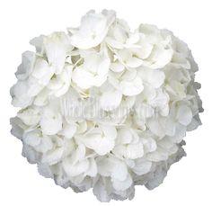 White Super Select Hydrangea Wedding Flower - 15 stems, $79.99