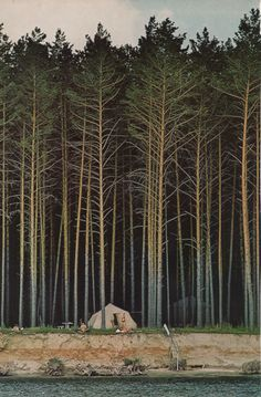 camp, tree, dream, national geographic, the edge, tent, the great outdoors, forest, place
