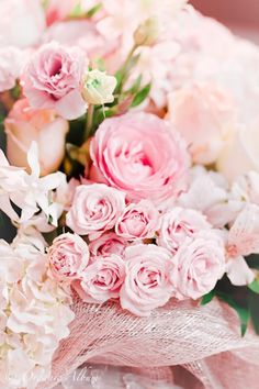 pastel pink roses