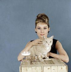 cats, peopl, retro photos, breakfast at tiffanys, audrey hepburn, audreyhepburn, fashion photography, tiffani, cat lady