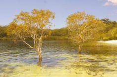 Golden hour at the dune lakes  #fraserexplorer #fraserisland #queensland #australia www.fraserexplorertours.com.au