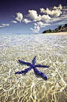 Blue starfish in Tahiti