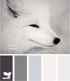 arctic tones  - ♥ these colors