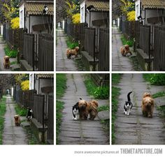 Every day at the same time she waits for him, he comes and they go for a walk…