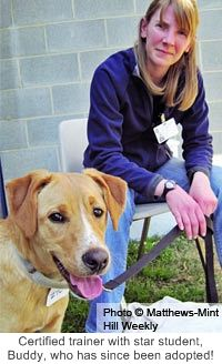 Help Shelter Dogs Get Adopted at The Animal Rescue Site
