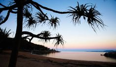 Arthur Bay at dusk, with a Pandanus tree in the foreground, Magnetic Island. #townsvilleshines #island #travel