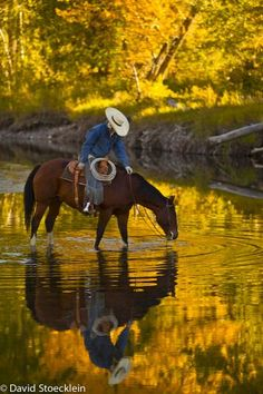 beauti pictur, country animals, autumn scenes, cowboy on horse, western horseback riding, anime cowboys, western horses, drinking water, countri