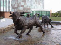 University of South Florida Bulls