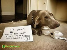 Man, I love dog shaming