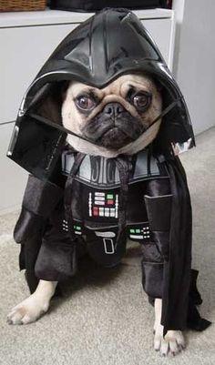 Especial de Halloween: Disfraces para mascotas