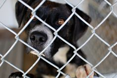 Adopt a Pet, Dogs, Shelter, Humane Society, SBK Animal Center, Blountville TN Photo © M.J. Photography. All Rights Reserved. http://www.mjphotographyTN.com/  #mjphotographyTN #petphotography