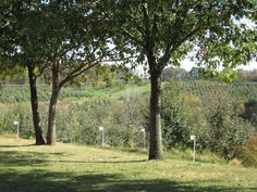 Wilson's Apple Orchard outside Iowa City, IA.  On any beautiful fall day, I wish I could be there!