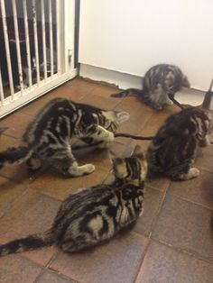 Kittens, kittens, everywhere. kitten