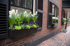 Creating a Window Box for Your Apartment brick homes with shutters, red brick house with shutters, spring flowers, window boxesgarden, windowbox, black window box, black windows, window flower boxes, red brick home
