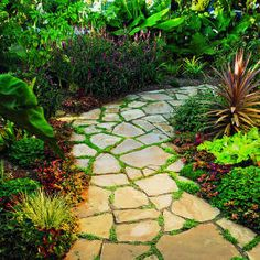 flagstone with moss - great idea for patio or walkway