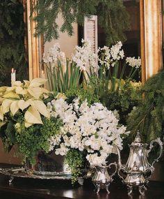 Christmas vignette with paperwhites, evergreens, azaleas, and poinsettias.