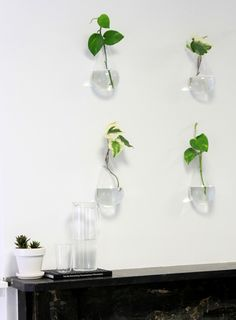 DIY living wall for office or home