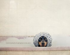 Creative Pet Photographer Shoots Her Adorable Three Dogs - My Modern Metropolis