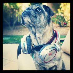 #Pug Life