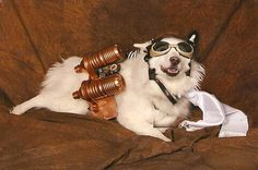dog outfits, steampunk dog, puppies, animals, steampunk anim, dogs, halloween costumes, pet, dog costumes