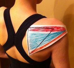Rotator cuff muscle