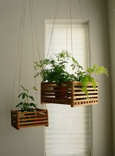 Hanging plants in old crates