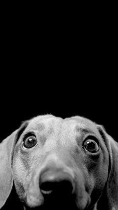 I'm a dog! :))