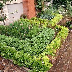 Vegetable garden idea.