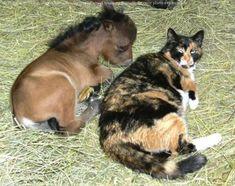 Mini horse, maxi cat