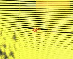 Neon Yellow Blinds