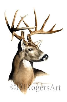 Whitetail Buck - Art Print - Watercolor Painting - Hunting Art - Signed by Artist DJ Rogers - Wildli