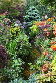 View along the lower garden stream (6th June) by Four Seasons Garden, via Flickr
