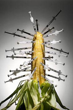 Genetically Modified Corn - Allergies to GMO Corn - Elle