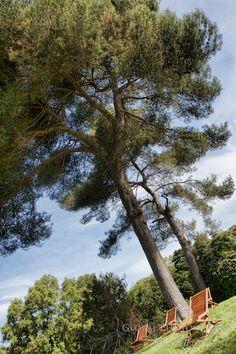 Santa Clotilde's Botanical Garden