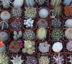 9 Gorgeous Cactus Collection:$14.95 Amazon for thank you gifts.
