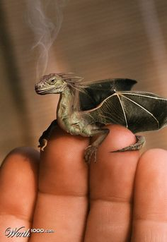 Wee dragons.  Not real.  *le sigh*
