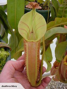 New Zealand Carnivorous Plant Society Summer Show