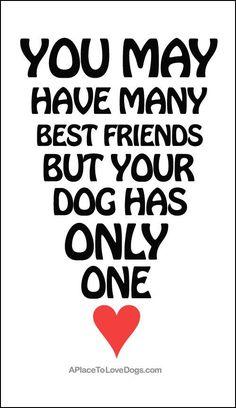 Você pode ter alguns melhores amigos, mas seu cachorro só tem um: Você! <3 #Cachorro #MelhoresAmigos