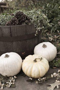 white pumpkins!