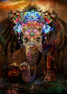 Psychic elephant, we LOVE this picture! #psychic #elephant @animals