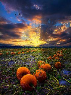 Sunrise in the pumpkin patch.