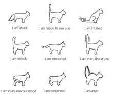 cats, cat tail, anim, cat emot, cat cat